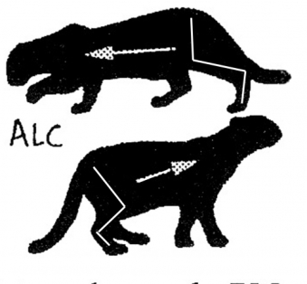 ALC motion